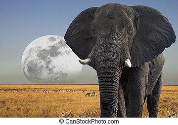 Moon rising over wildlife in Etosha National Park in Namibia