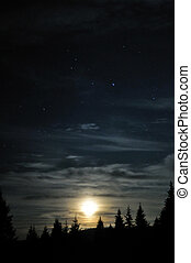 Moon shining above the dark forest