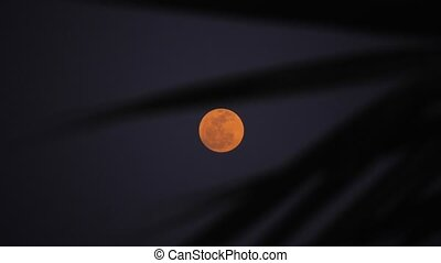 moon through palm tree - Moon light through palm tree leafs