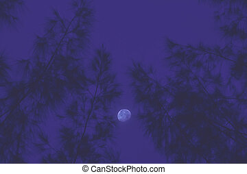 Moon with tree abstract background.