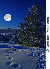 Spruce pines covered by snow at moonlight night
