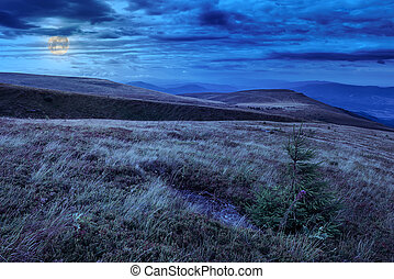 moonlight on stone mountain slope with forest - mountain...