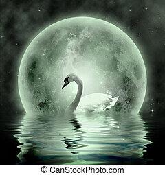 Swan - Moonlight Swan- beautiful swan under the moonlight