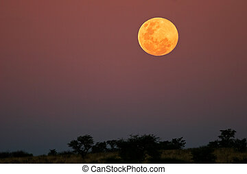 African landscape with a golden full moon low in the sky