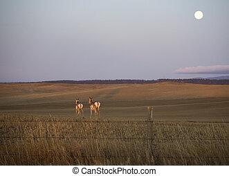 Moonrise over antelope