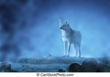 moonset, loup