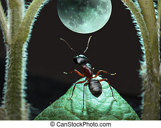moonwalk - garden ant dancing under moon