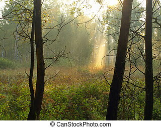 moor landscape with fog and sunbeams