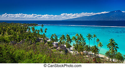 moorea wyspa, drzewa, tropikalny, dłoń, tahiti, plaża, prospekt