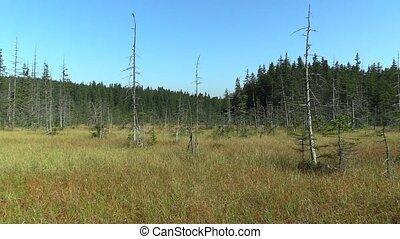 Moorland bogs, small moss lake in the NPR Rejviz, dying...