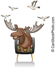 Moose and birds on television screen