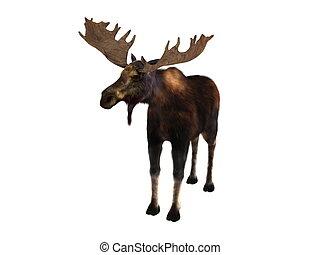 moose - image of moose