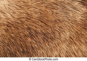 Moose Coat / Moose Fur Real Closeup Photo. Animals Photo...