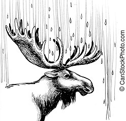Moose in the rain