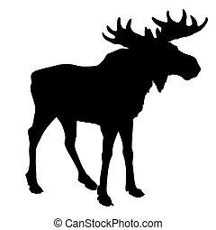 moose, silhuett, vit fond