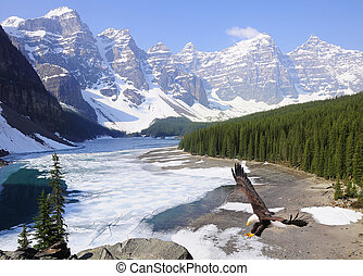 Moraine lake. - Bald eagle on Moraine lake background. Banff...