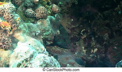 Moray at bottom on background underwater landscape in Red sea.