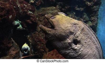 Moray Eel in aquarium shot