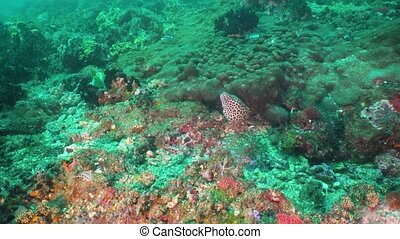 Moray eel on the coral reef. - Moray eel tropical fish on a...