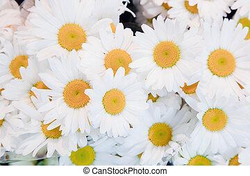 morbido, fiori primaverili, fondo