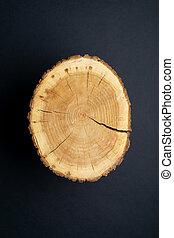 morceau, sommet arbre, annuel, anneaux, arrière-plan., section transversale, noir, bois, toqué, gros plan, vue.