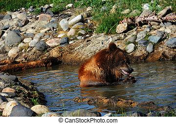 morder, urso, peixe