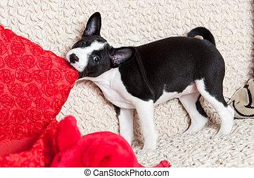 mordidas, cão, travesseiro