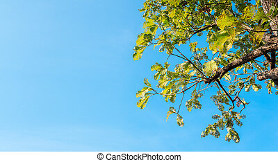 mordu, bleu, arbre, feuilles, ciel, fond
