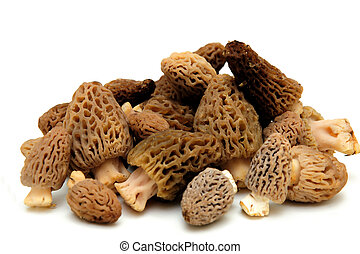 Morel Mushroom - Morel mushrooms from the California sierra...