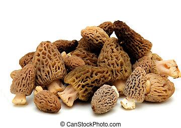 Morel Mushroom - Morel mushrooms from the California sierra ...