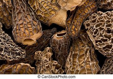 Morel Mushrooms - Background texture of several dried Morel...