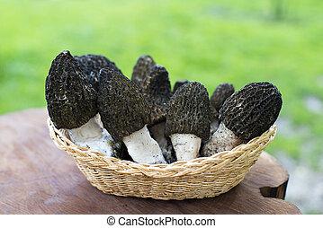 Morel mushrooms - Black morel mushrooms in basket outdoor