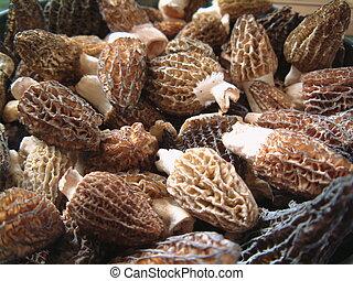 Morel Mushrooms - Wild-harvested morel mushrooms, Washington...
