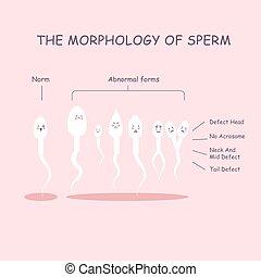 morfología, esperma