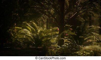 morgen, bosje, vroeg, mariposa, sequoias, zonlicht