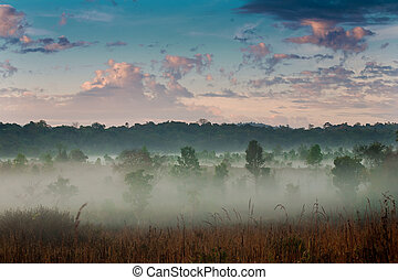 morgen, nebel, und, sky.