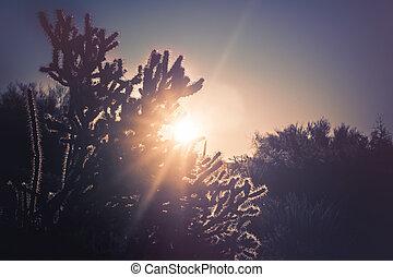 morgen, woestijn, usa, zonopkomst