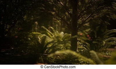 morgen, zonlicht, mariposa, vroeg, sequoias, bosje