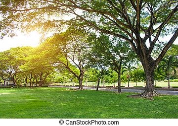 morgon, lätt, in, publik parkera, med, grönt gräs, och, grön, frisk, träd.