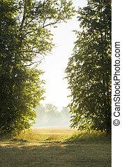morgon, solljus, och, dimma, göra, deras, väg, genom, den, träd
