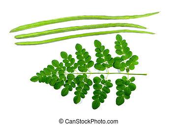 moringa-and-drumstick