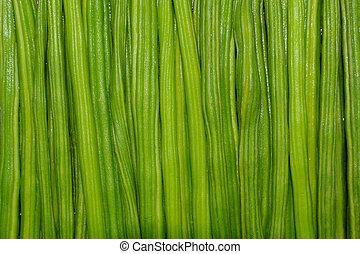 closeup image of fresh moringa oleifera dumstick vegetable.