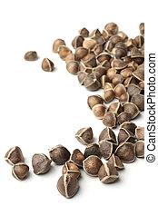 Moringa oleifera seeds on white background
