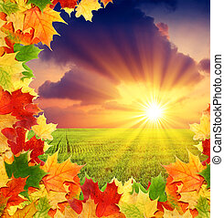 morning - autumn field with border from fall colored leaves