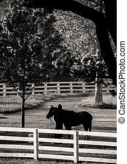 Morning Bath at Horse Farm