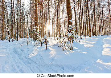 morning bright sun in the winter forest