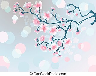 Morning cherry blossoms