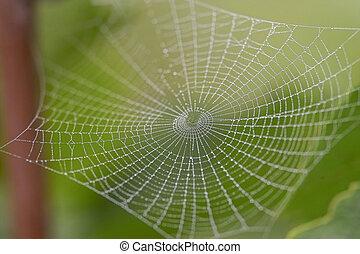 Morning cobweb