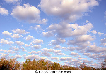 Morning cumulus over the trees.