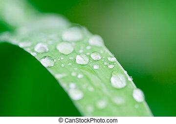 morning dew 1